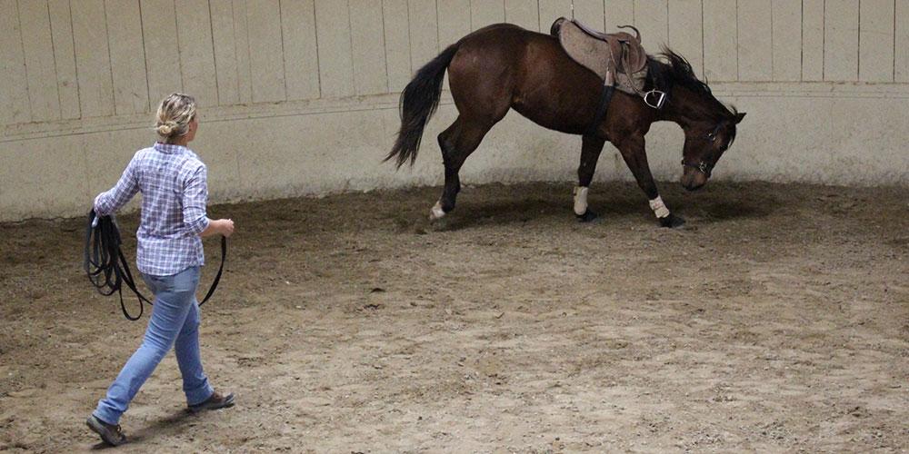 Monty Roberts Advanced Course of Horsemanship