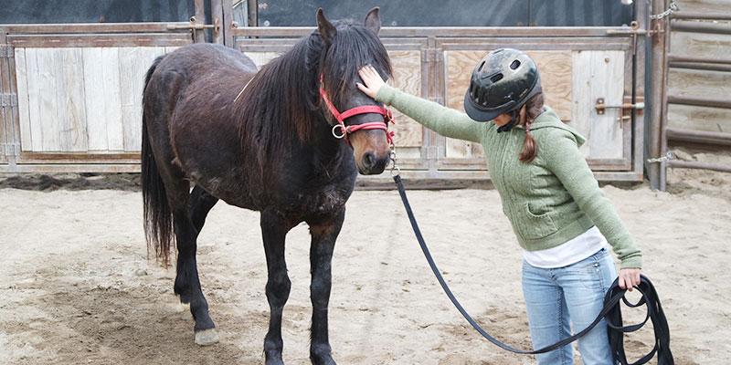 Monty Roberts International Learning Center - Gentling Wild Horses