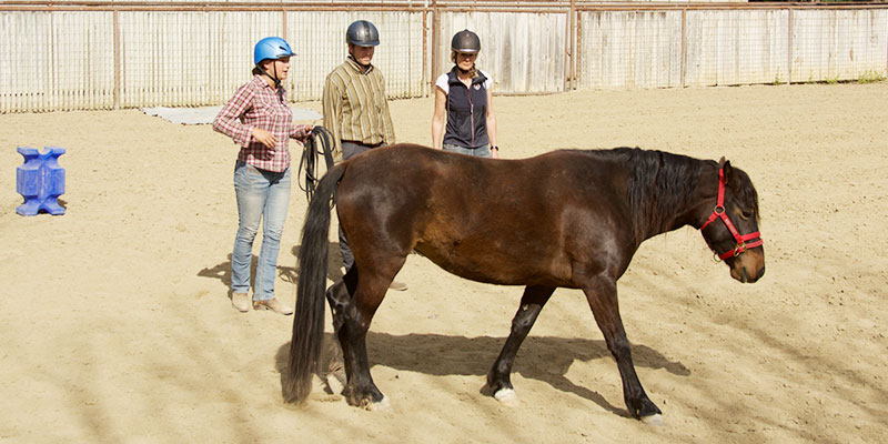 Monty Roberts Courses - Horsemanship 101