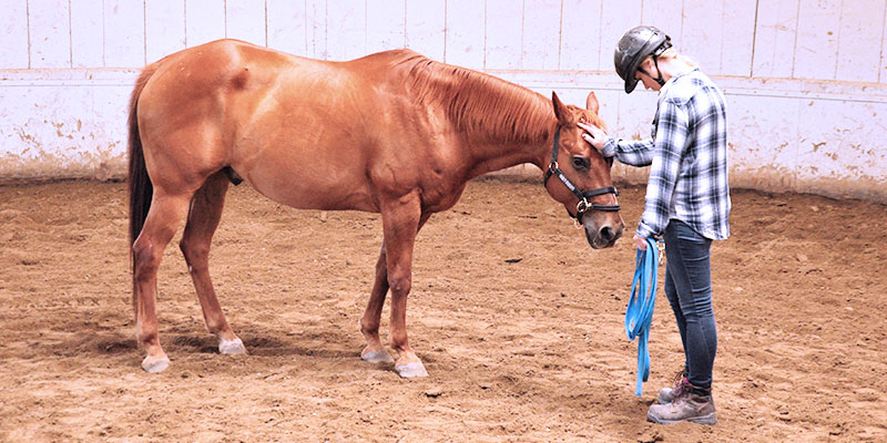 Monty Roberts Courses - Introductory Course of Horsemanship