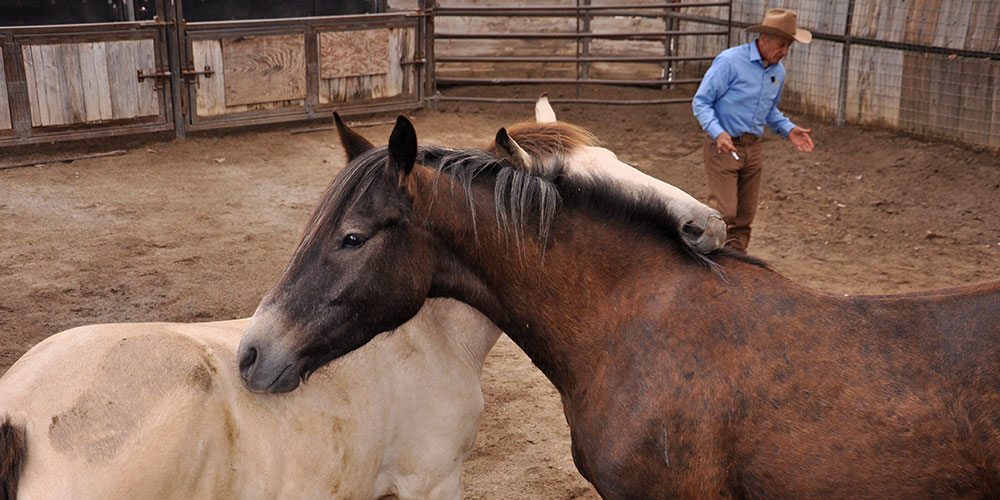 Gentling Wild Horses with Monty Roberts