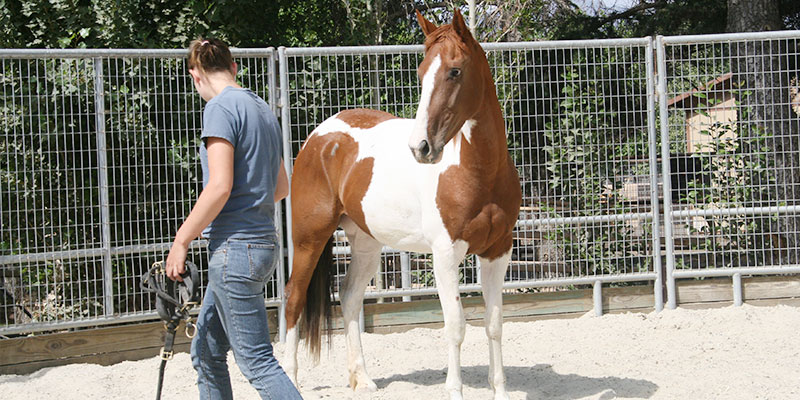 Monty Roberts International Learning Center - Join-Up with a horse