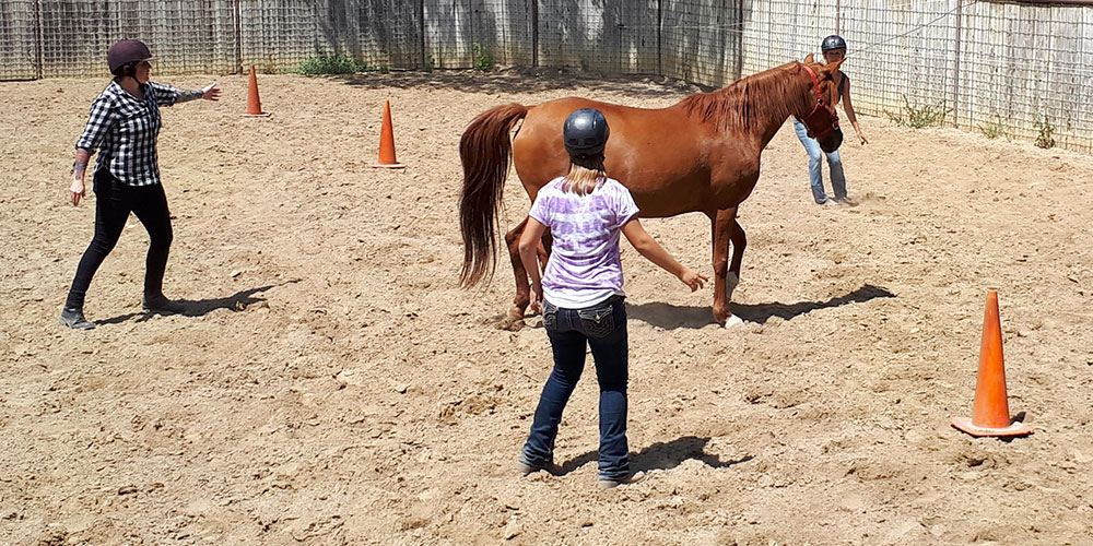 Monty Roberts Introductory Course - Module 01 First Steps