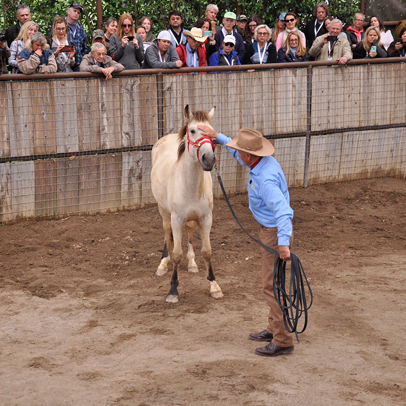 Monty Roberts gentling wild horse at The Movement 2019