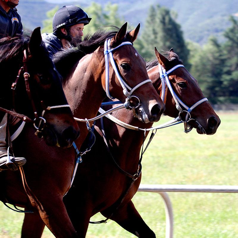 Monty Roberts Dually Halter - Dually horse training halter
